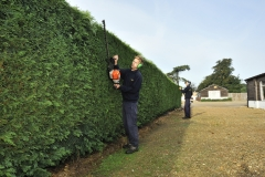 Hedge cutting and grounds maintenance Dorset.