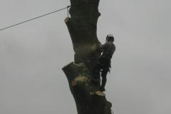 Tree surgery Dorset.