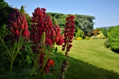 Edens Landscapes - Garden maintenance Dorset.