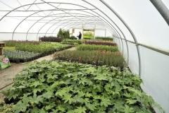 Edens Landscapes, garden services Dorset.